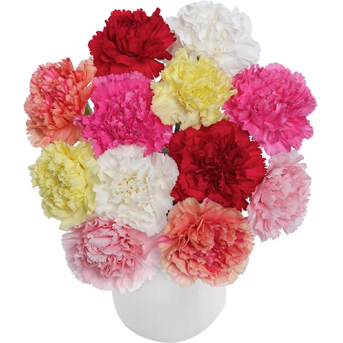 mother's day-gift-flowers-carnations